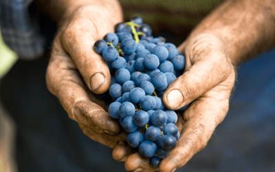 Comment s'y retrouver entre vin biologique (Label AB), biodynamique et naturel ?